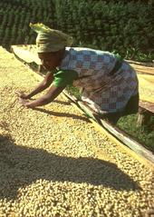 Kaffee Ethiopia.jpg