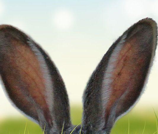 Newsletter für Ostern